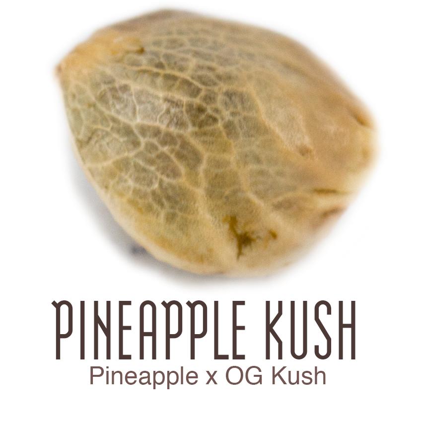 Pineapple Kush semillas de marihuana CBG