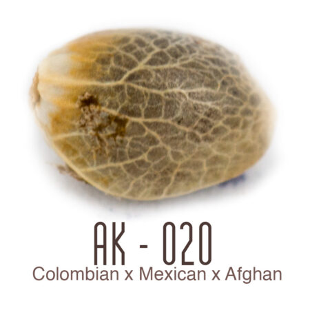 AK-020 Cannabis Seeds available from Amsterdam Genetics