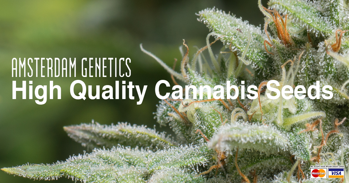Amsterdam Genetics - High Quality Cannabis Seeds and Smoking
