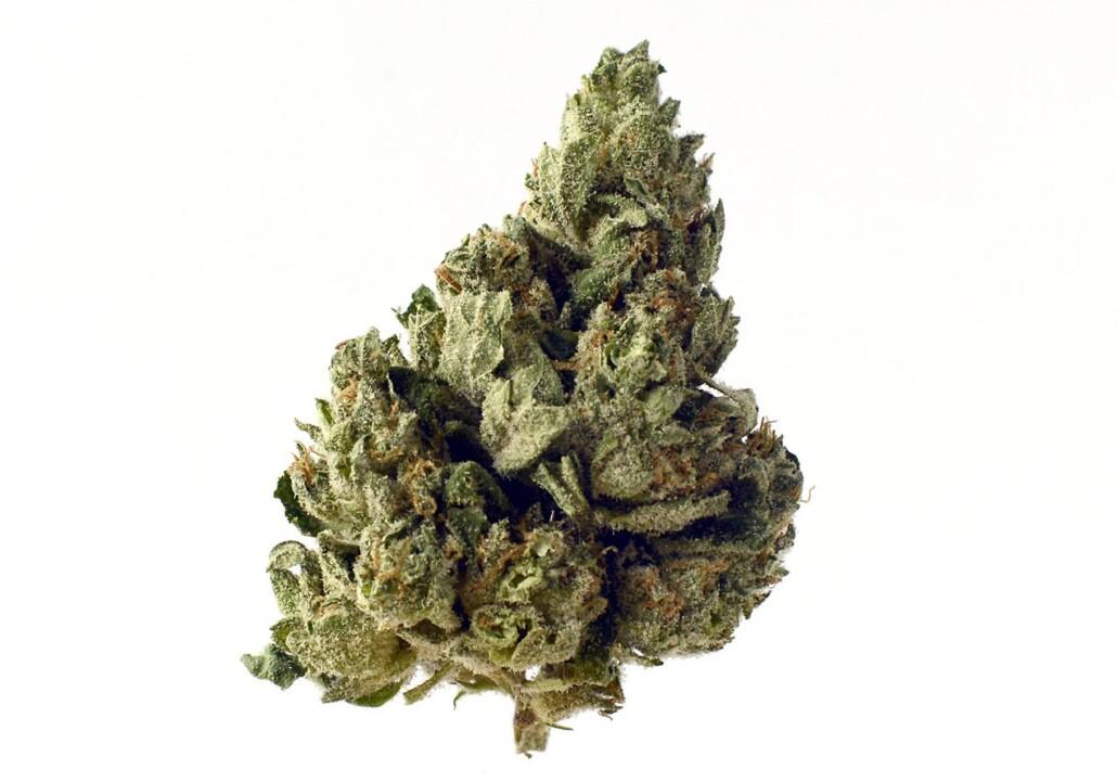 Choco Kush top 3 autoflower cannabis seeds