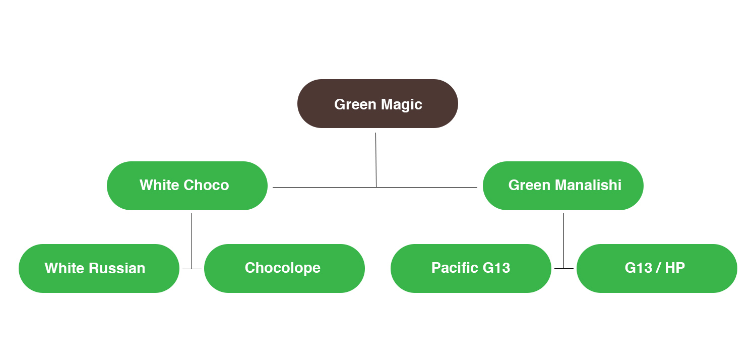 Green Magic Strain Family Tree