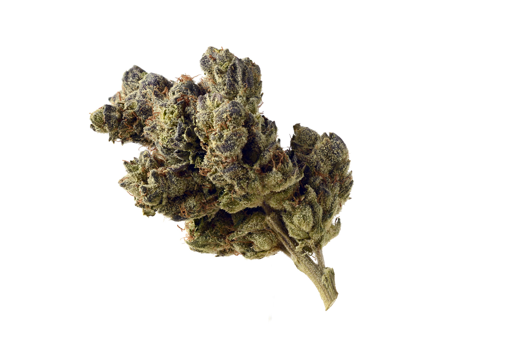 """Image result for Blue Magic strain"""" best weed in Amsterdam"""