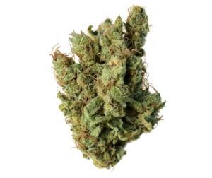 cogollo cannabis sativa índica