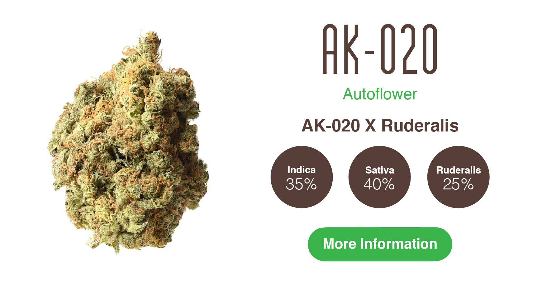 highest yielding autoflower AK 020