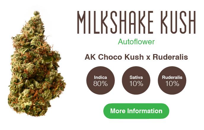 milkshake kush auto