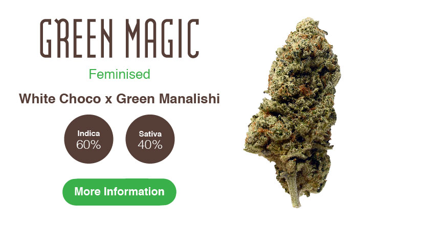 green magic amsterdam genetics