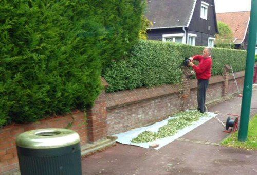 world's biggest joint cannabis boxwood trimming