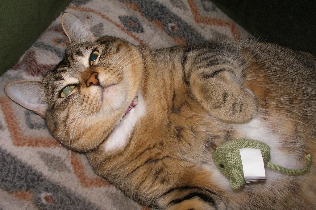 stoned cat catnip cannabis
