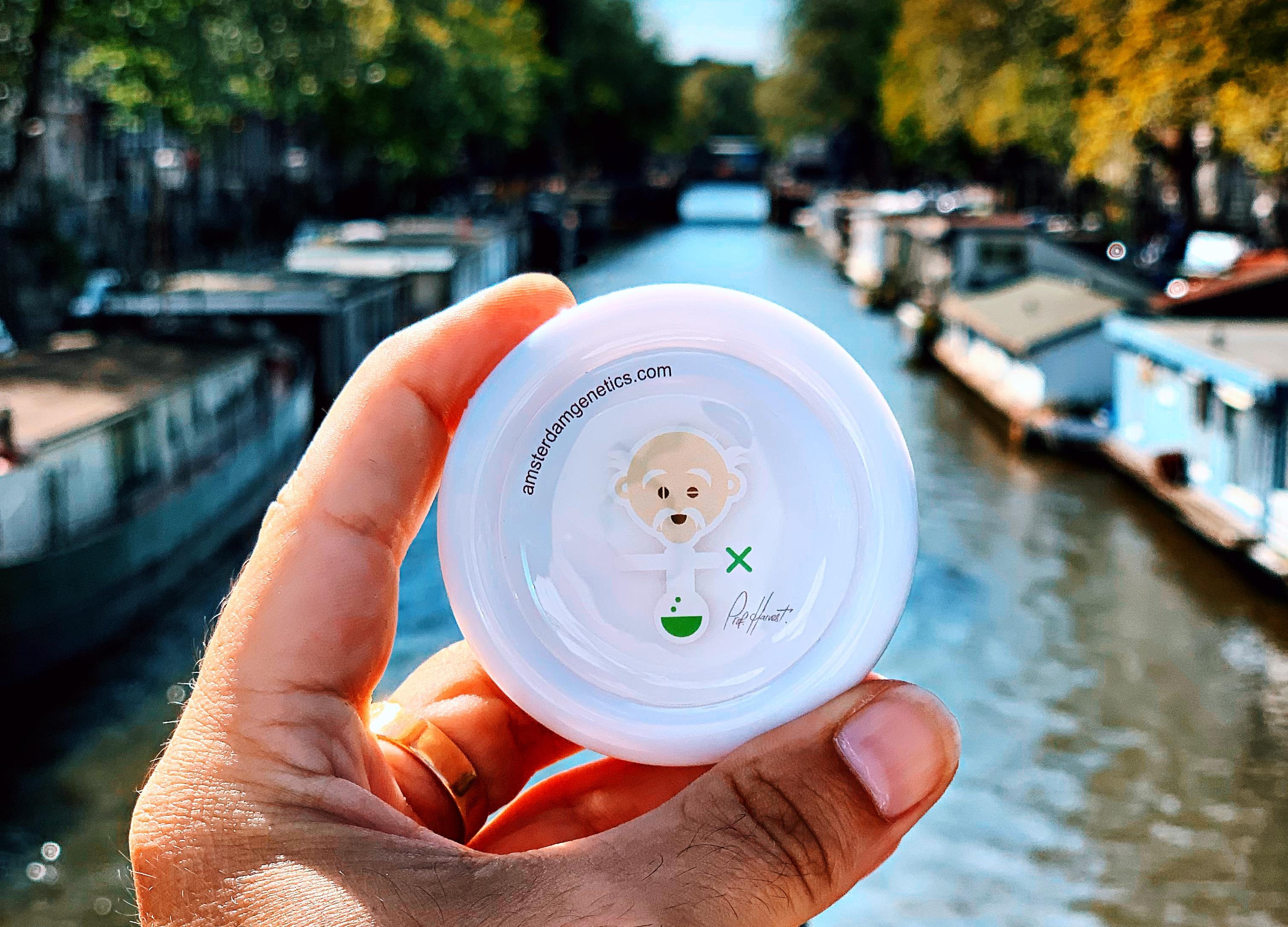 grinder Amsterdam Genetics