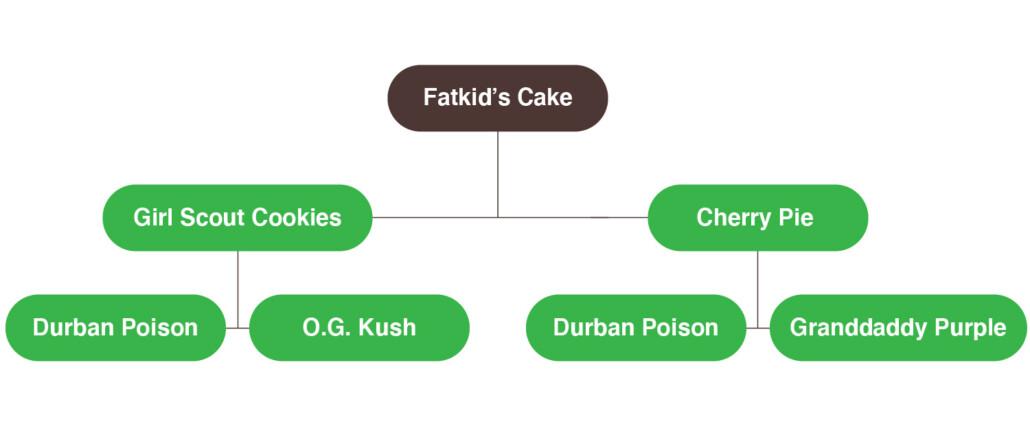 fatkid's cake myrcène cannabis