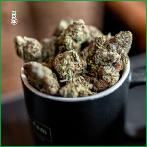 humuleme cannabis weed seeds
