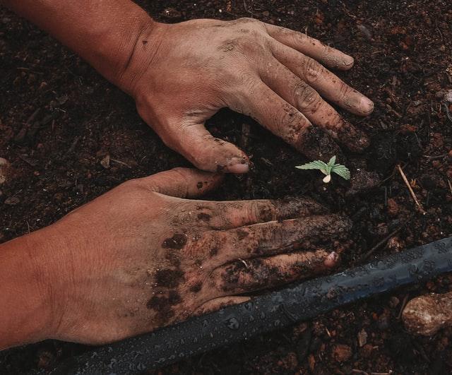 grow weed in garden soil