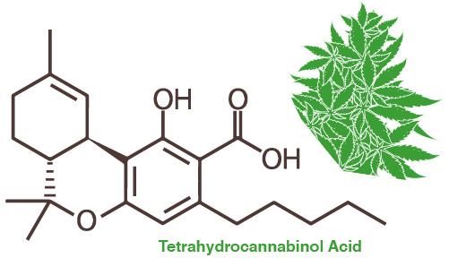 Cannabis decarboxyleren amsterdam genetics