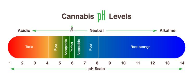 Ph waarde beste cannabis kweken