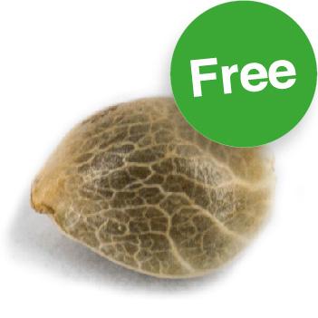 Amsterdam Genetics gratis wietzaden