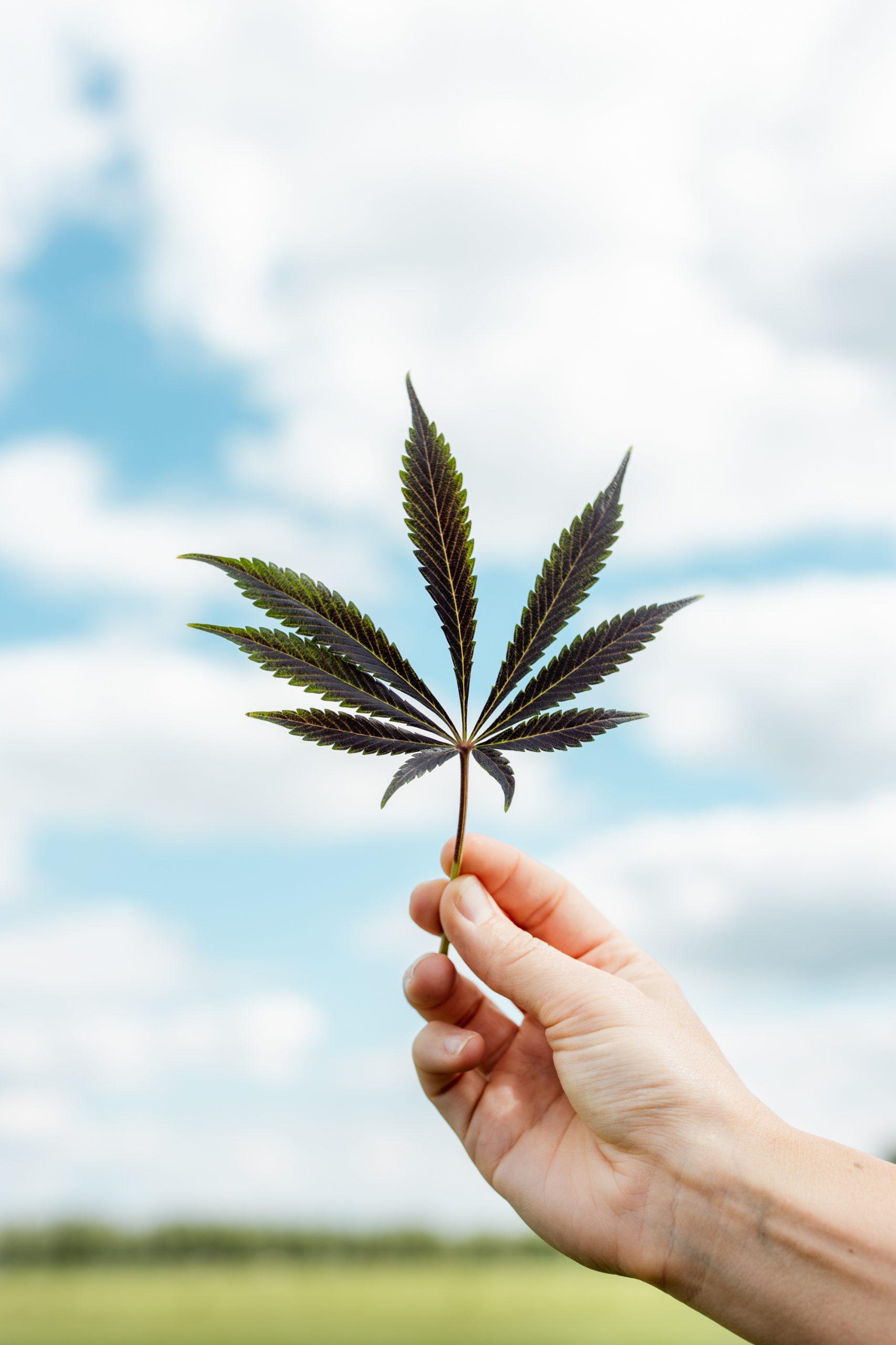 cannabis wetten