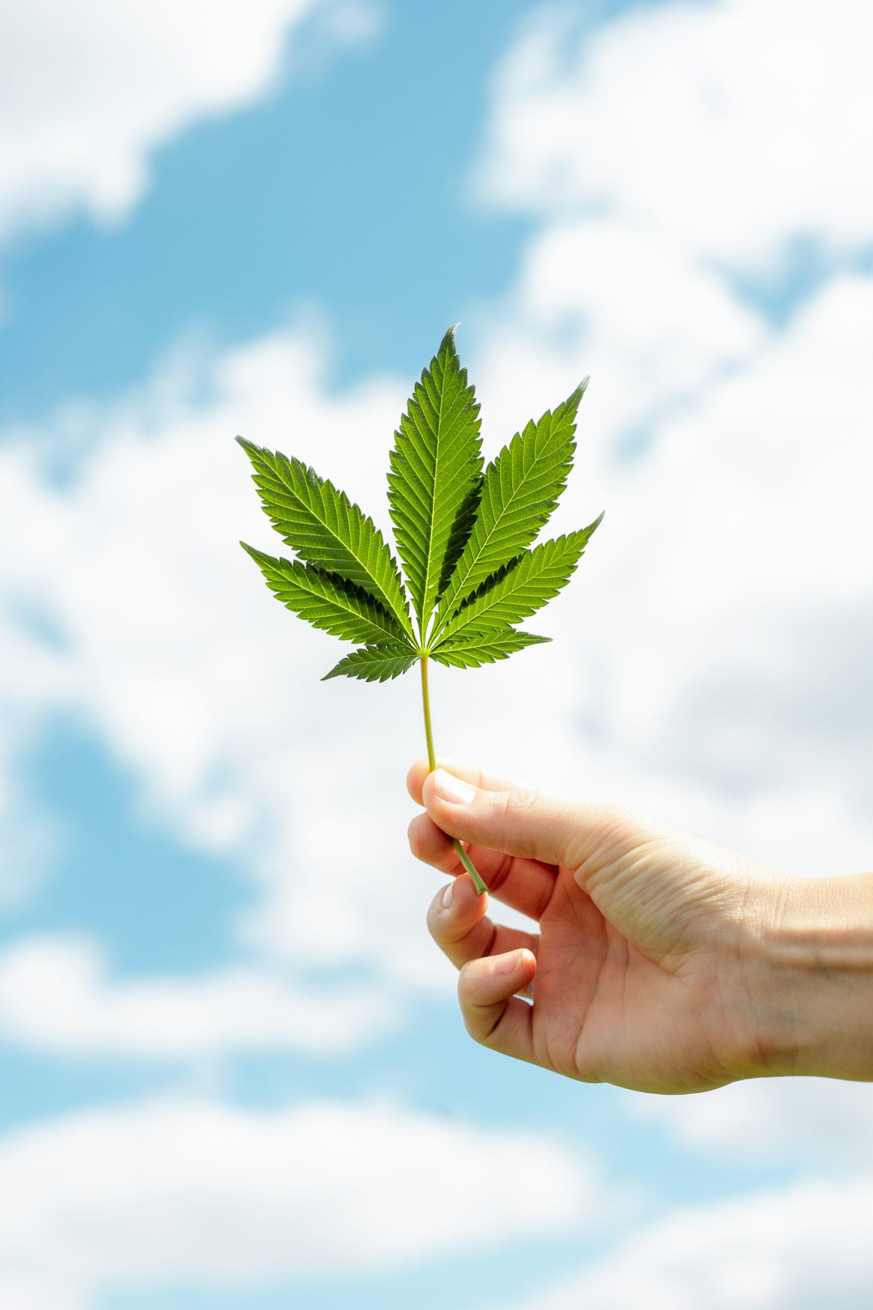 cannabis en angst