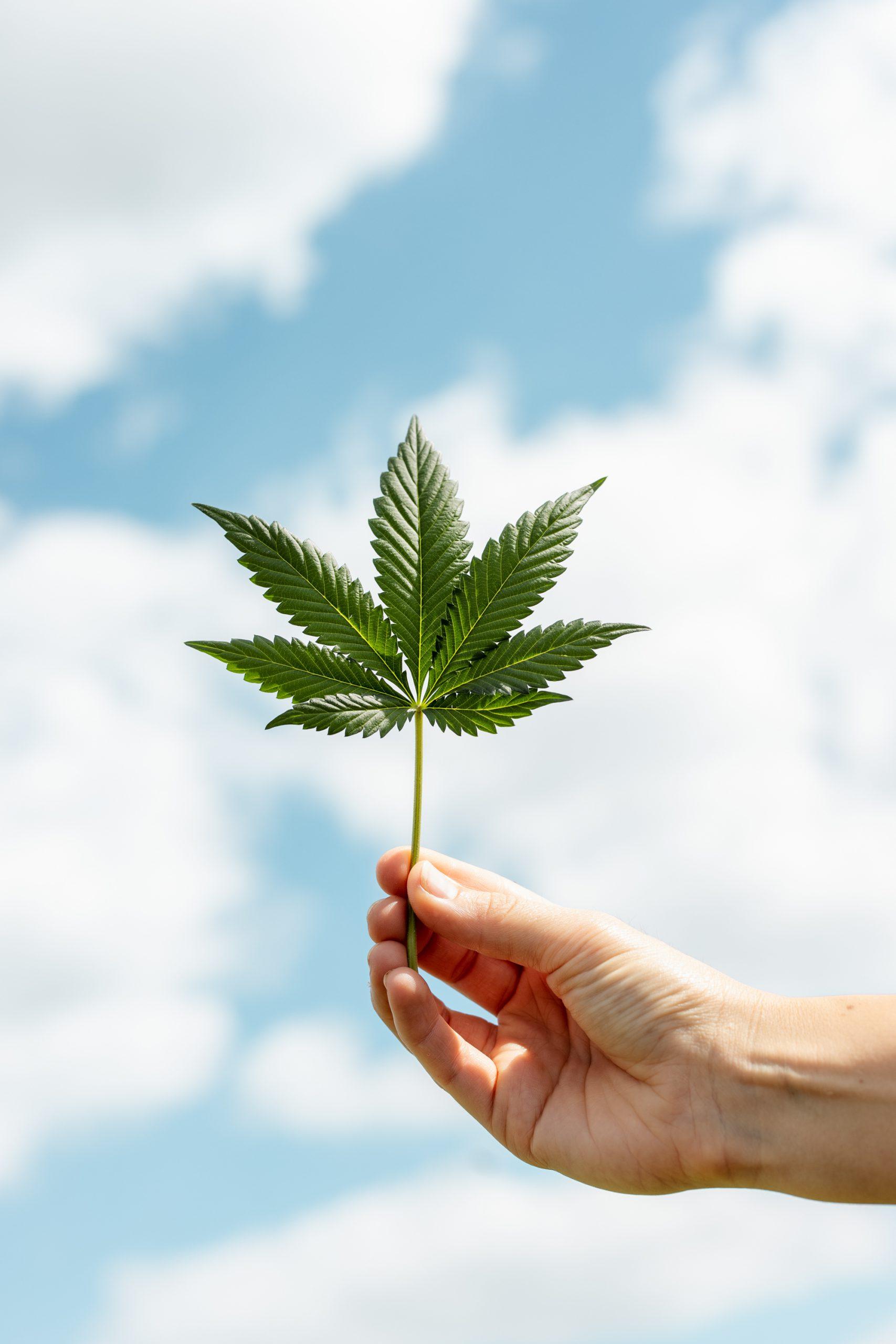 cannabis duurzaam kweken