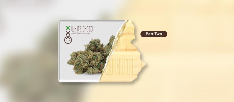 white choco grow