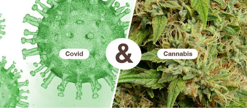 Cannabis bij covid-19
