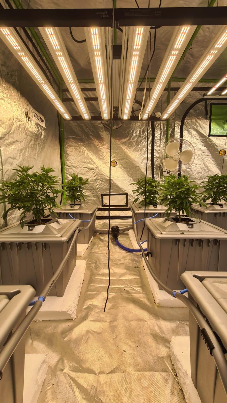 hydroponics hydro hydrocultuur wiet