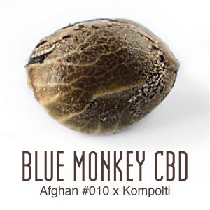 blue monkey cbd thc weed seeds