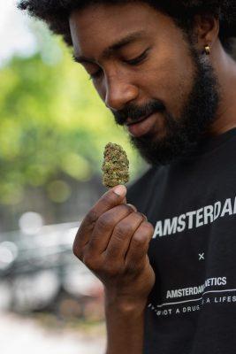 terpenos sativa índica cannabis