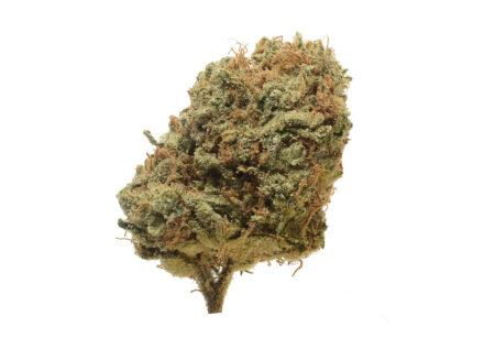 Critical Mass cannabis against pain