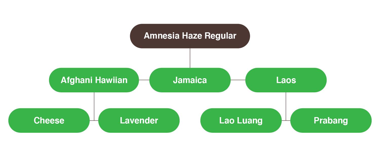 Génétique de la souche