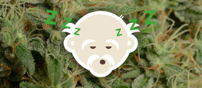 cannabis fatigue strains