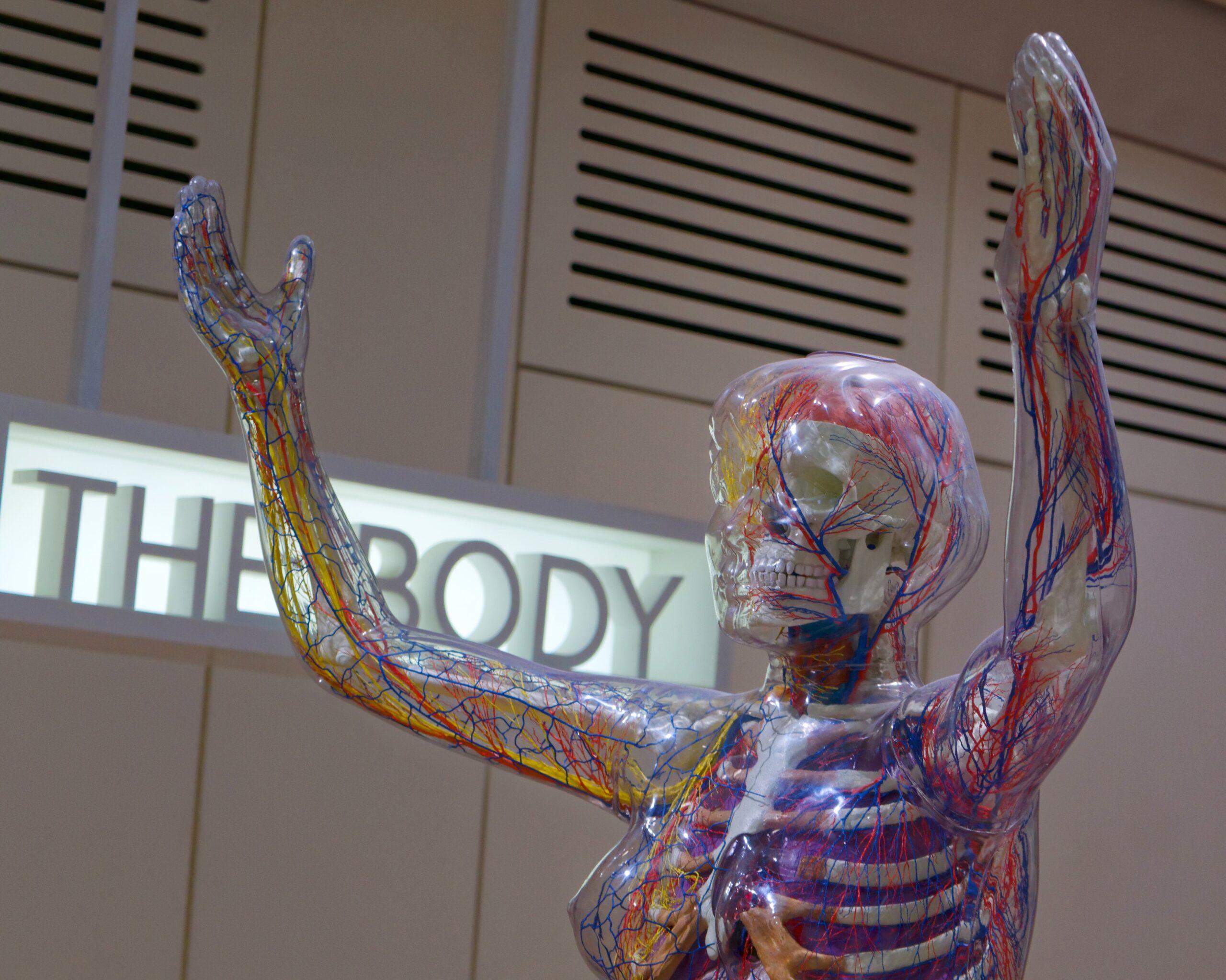 nerve system cbg and cbd