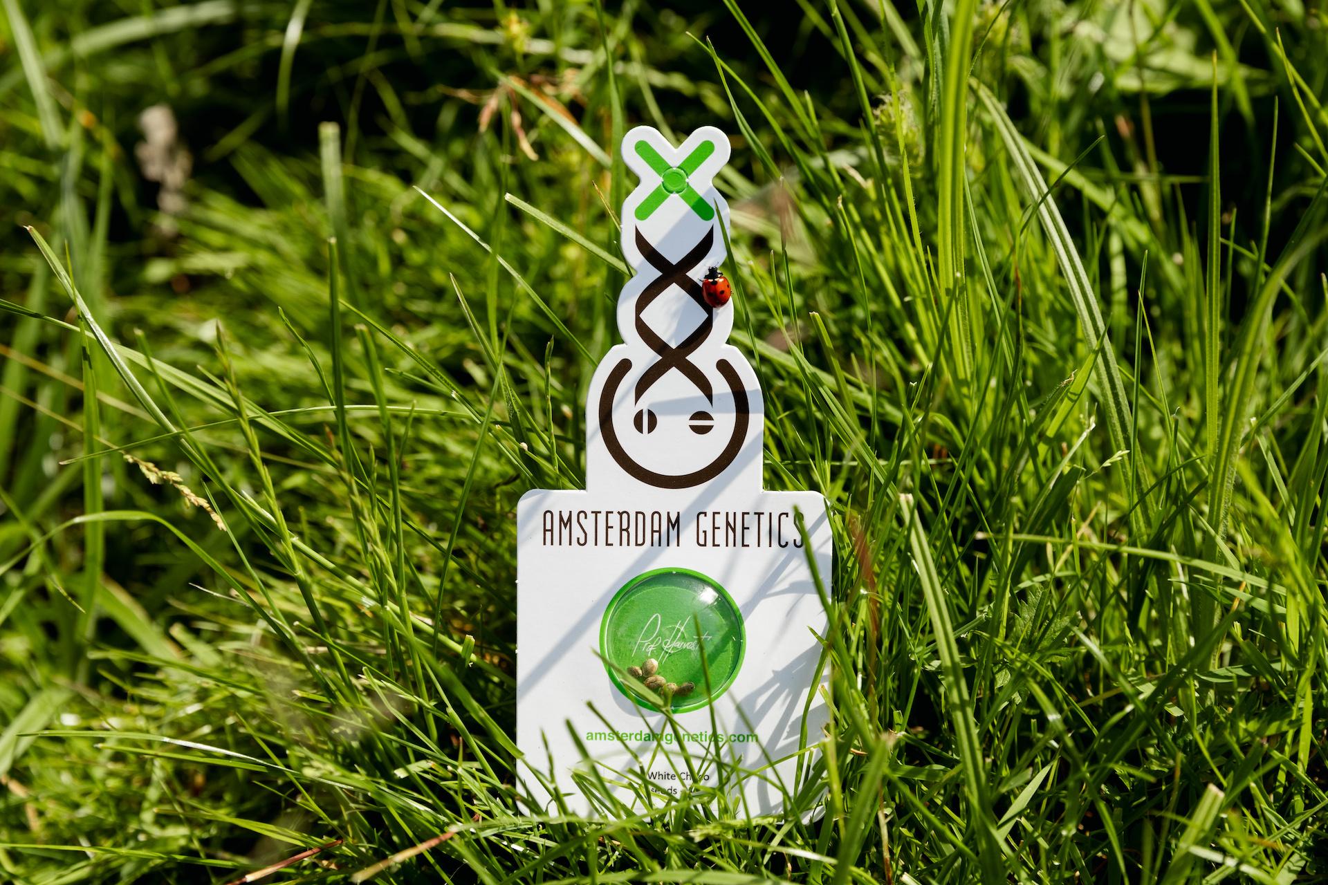 organic cannabis nutrients