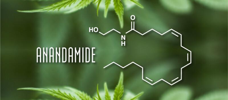anandamide