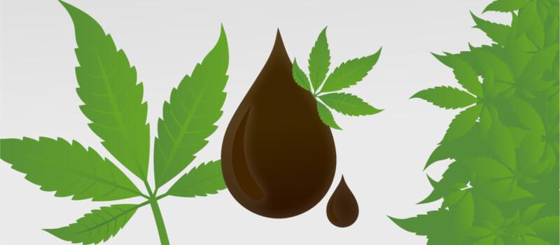 cannabis marijuana oil